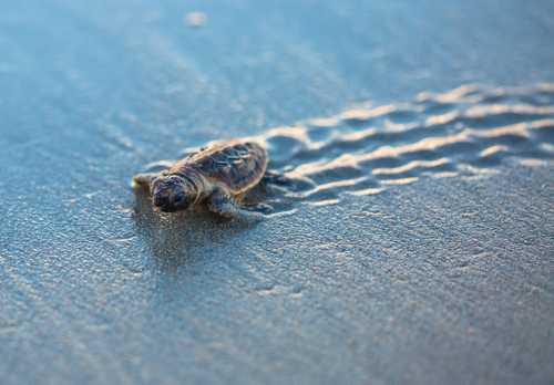 CryptoKitties провели благотворительный аукцион и привлекли $25 000 на поддержку морских черепах