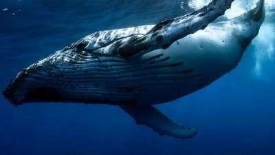Число биткоинов, удерживаемых «китами», выросло до двухмесячного максимума
