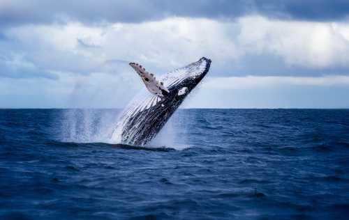 «Азиатский кит» начал отправлять биткоины на биржу Huobi