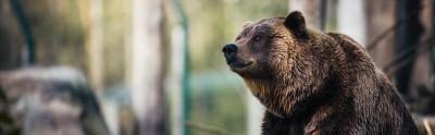 Мнение аналитика: Цена биткоина опустится ниже $8550 на фоне грядущего медвежьего пересечения