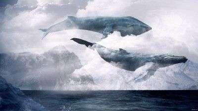 Биткоин-киты активизировались за последние 12 часов: Стоит ли беспокоиться инвесторам?