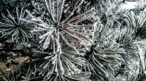 Lisk Blockchain заморожен из-за ошибки в тразакции | Freedman Club Crypto News