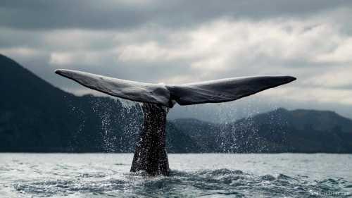 Биткойн-киты пополняют свои резервы в период снижения курса