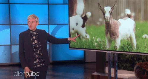 Телеведущая Эллен ДеДженерес в шутку провела ликбез о биткоинах