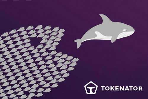 Tokenator: как частные инвесторы в ICO становятся китами