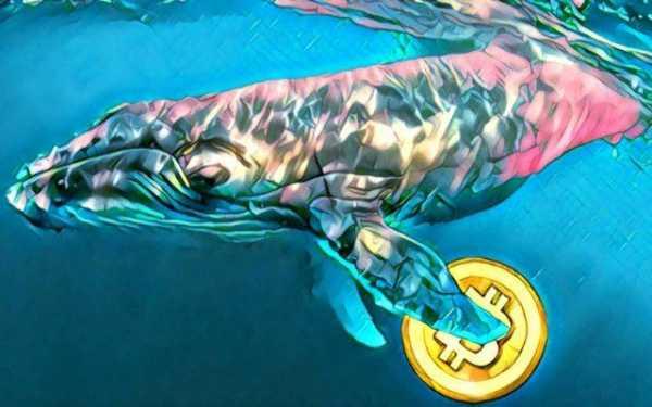 Процент накопленных китами биткоинов достиг 11-месячного максимума