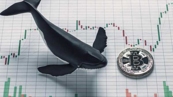 Тони Вейс: «предсказывать рост биткоина до $250 000 – безответственно»