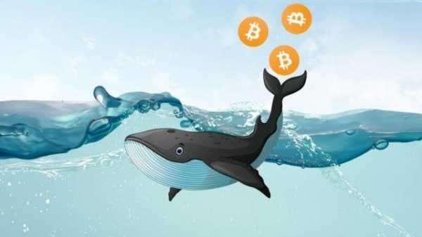 Аналитики Glassnode объяснили прирост числа китов на рынке биткоина