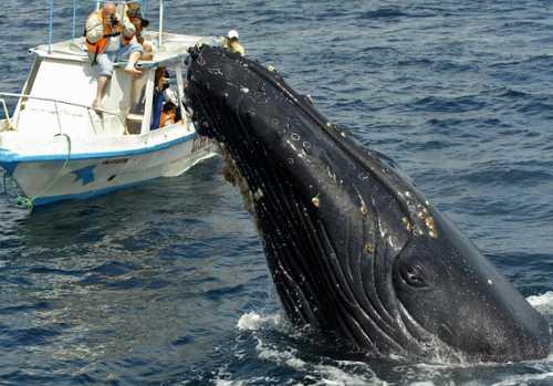 2 биткойн-кита слили биткойны на $100 млн за 24 часа