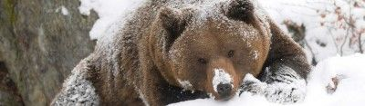 Цена биткоина держится выше $9000 — надежды медведей на «криптозиму» тают с каждым днём