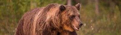 Мнение аналитика: «Крест смерти» на графике биткоина может стать медвежьей ловушкой